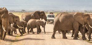 3 Days Kenya Safari to Amboseli