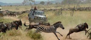 Absolute Holiday Safaris