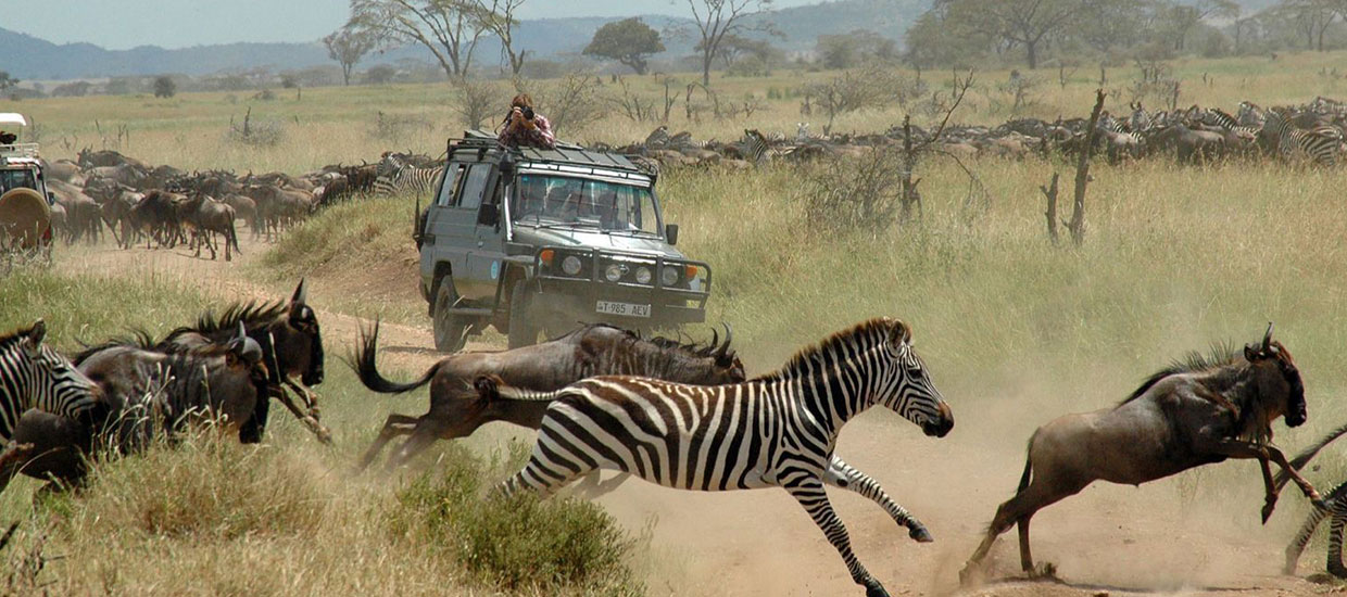 Absolute Holiday Safaris