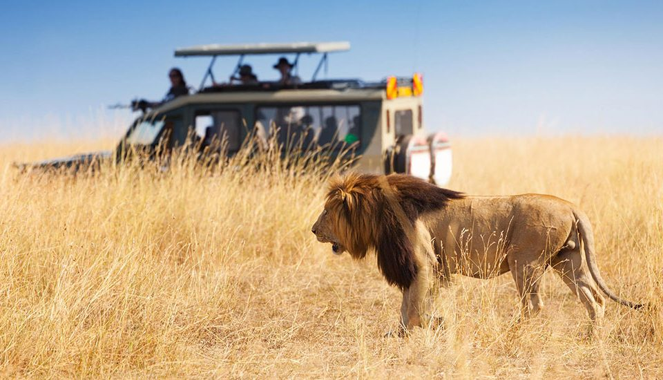 2020 TRAVEL PLANS WITH ABSOLUTE HOLIDAY SAFARIS