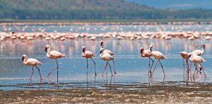 10 Days Kenya and Tanzania Circuit Safari Lake Nakuru, Masai Mara, Serengeti, Ngorongoro Crater, Amboseli, Nairobi