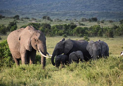 10 Days Masai Mara Game Reserve, Lake Nakuru, Amboseli National Park, Arusha, Serengeti, Ngorongoro Crater Budget Safari
