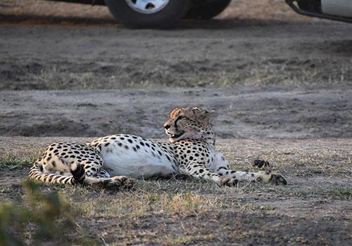 10 Days Masai Mara, Lake Nakuru, Amboseli, Arusha, Lake Manyara, Ngorongoro Crater and Tarangire National Park