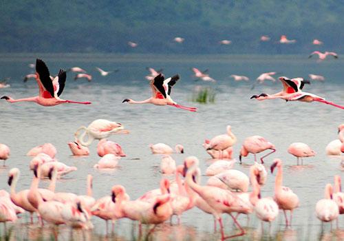 10 Days Standard Safari Masai Mara, Lake Nakuru, Amboseli, Arusha, Lake Manyara, Ngorongoro Crater and Tarangire National Park