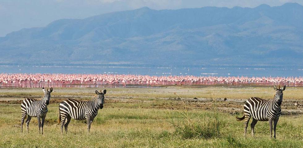11 Days Best of Kenya and Tanzania Budget Safari Masai Mara, Lake Manyara, Amboseli, Arusha, Lake Manyara, Serengeti and Ngorongoro Crater