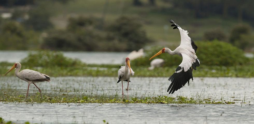12 Days Private Safari Masai Mara, Lake Naivasha, Lake Bogoria, Lake Nakuru, Samburu, Amboseli