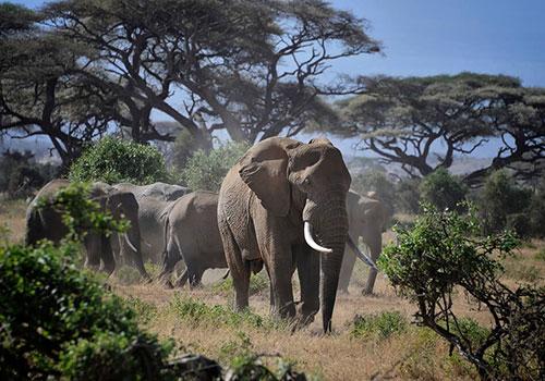 2 Days Kenya Budget Safari Amboseli National Park.