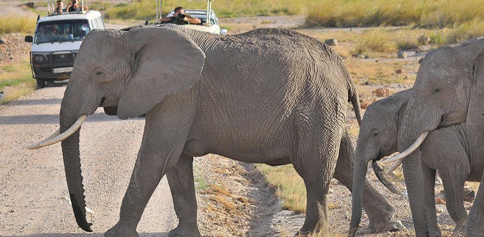 2 Days Kenya Budget Safari Amboseli National Park