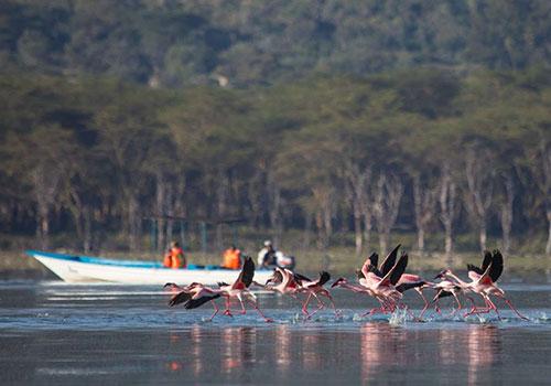 2 Days Lake Nakuru and Lake Naivasha Great Trip