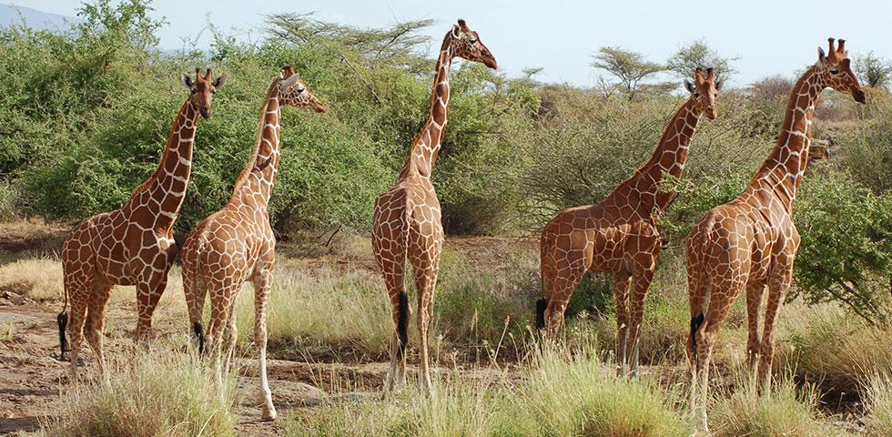 3 Days Kenya Lodge Safari Samburu National Reserve