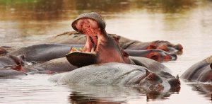 4 Days Kenya Budget Safari Masai Mara and Lake Naivasha