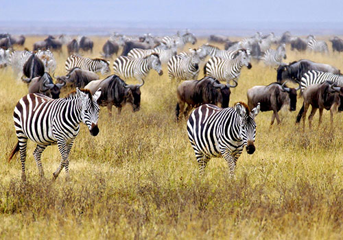 4 Days Kenya Great Safari to Great Masai Mara Game Reserve Only