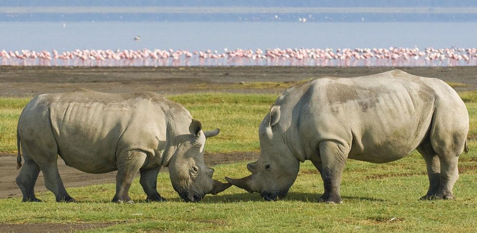 4 Days Kenya Wildlife Safari to Famous Masai Mara and Lake Nakuru