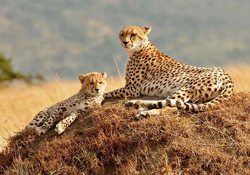 5 Days Kenya Budget Safari Great Masai Mara, Lake Nakuru and Lake Naivasha