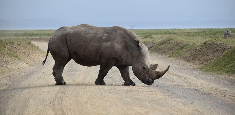5 Days Kenya Budget Safari Masai Mara, Lake Nakuru and Olpejeta