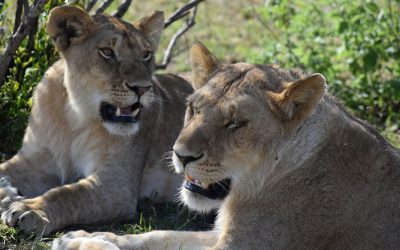 Kenya Safari Holiday Tour