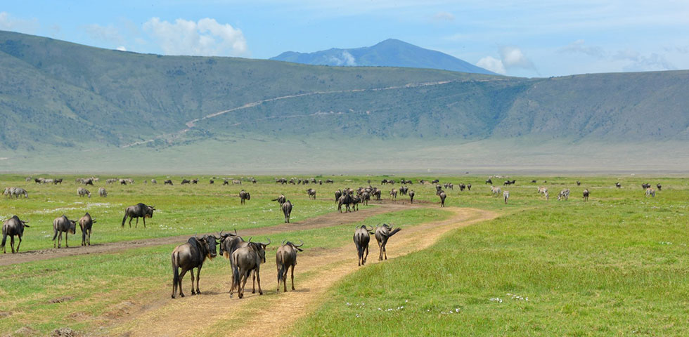 6 Days Kenya and Tanzania Budget Safari Amboseli National Park, Arusha, Lake Manyara, Ngorongoro Crater and Tarangire National Park