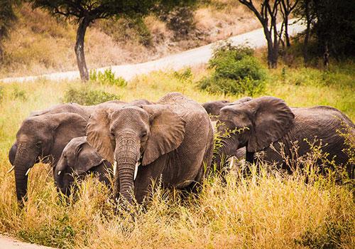 6 Days Kenya and Tanzania Standard Safari Amboseli National Park, Arusha, Lake Manyara, Ngorongoro Crater and Tarangire National Park