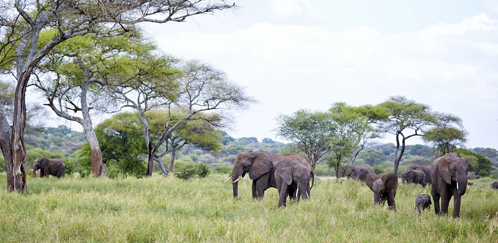 6 Days Kenya and Tanzania Standard Safari Amboseli National Park, Arusha, Lake Manyara, Ngorongoro Crater and Tarangire National Park