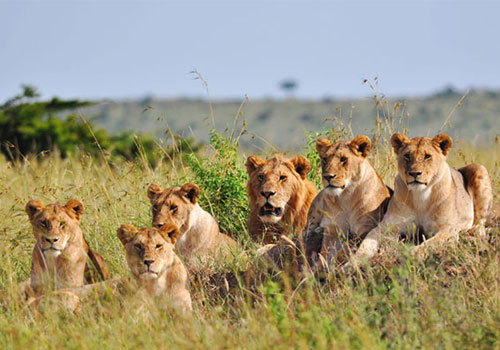 6 Days Safari Kenya and Tanzania Masai Mara, Lake Nakuru, Arusha, Lake Manyara and Ngorongoro Crater