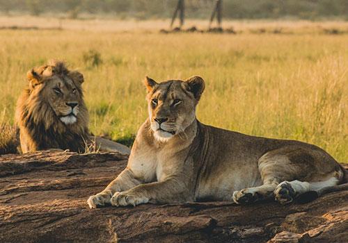 6 Days Standard Circuit Safari Kenya and Tanzania Masai Mara, Serengeti and Ngorongoro Crater