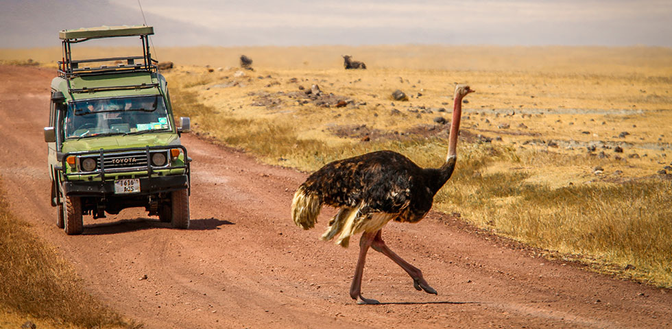 Circuit Kenya Tanzania Safari/Masai Mara Game Reserve/ Serengeti National Park/Ngorongoro Crater/Wildlife Adventure Safari