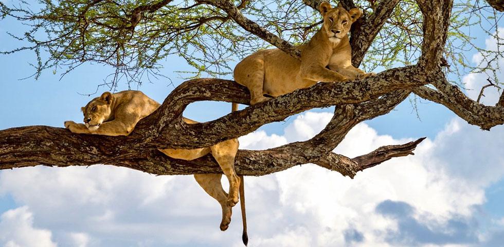 6 Days Standard Safari Kenya & Tanzania Masai Mara, Lake Nakuru, Arusha, Lake Manyara and Ngorongoro Crater