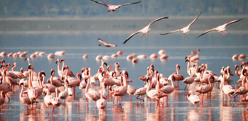 7 Days Kenya Budget Safari Masai Mara, Lake Nakuru, Lake Naivasha and Amboseli National Park