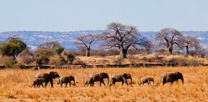 7 Days Kenya Circuit Safari Lake Nakuru, Masai Mara, Serengeti, Ngorongoro Crater and Arusha