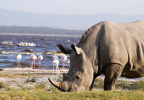 7 Days Kenya and Tanzania Combined Masai Mara, Lake Nakuru, Arusha, Serengeti National Park and Ngorongoro Crater