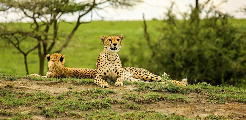 Incredible Tanzania Safari/Lake Manyara National Park/ Serengeti National Park/ Ngorongoro Crater/ Lake Natron