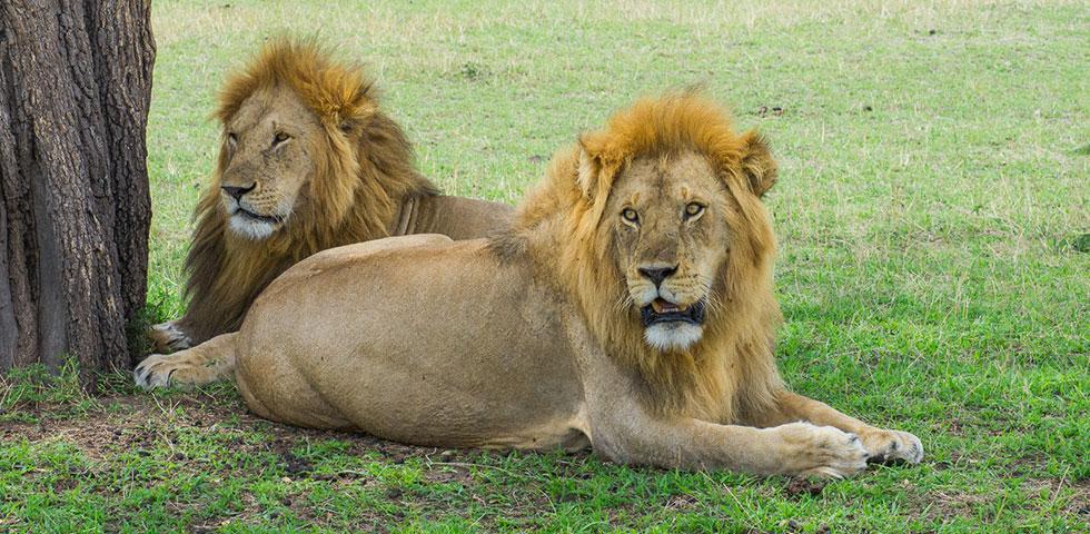 Tanzania Safari Tour/Tarangire National Park/Lake Manyara National Park/ Serengeti National Park/ Ngorongoro Crater