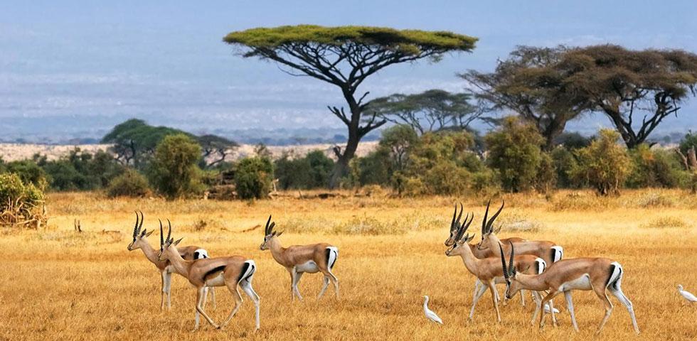 Magical Kenya Safari Package