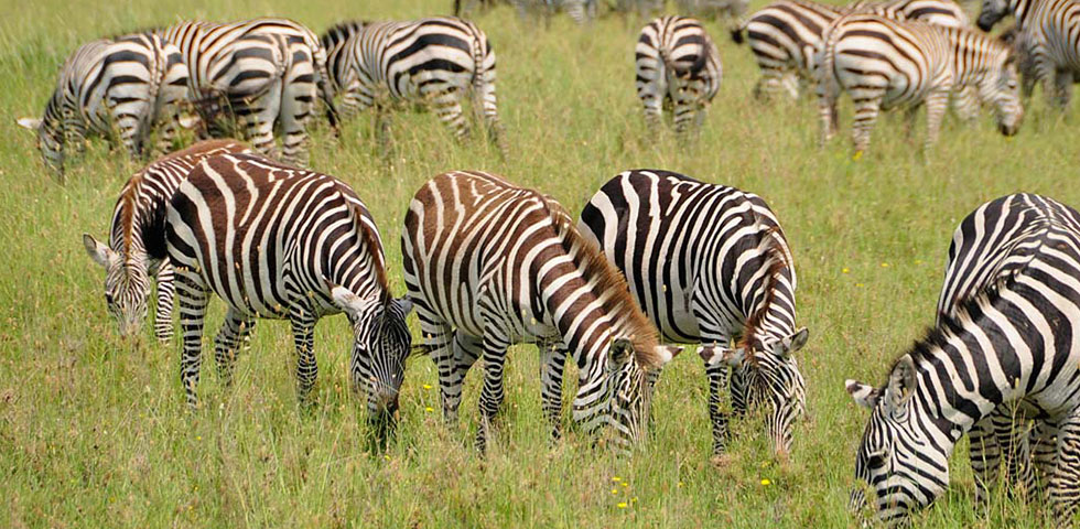 Tanzania Camping Safari/Tarangire National Park/Serengeti National Park/Ngorongoro Crater/Tanzania Safari Tour