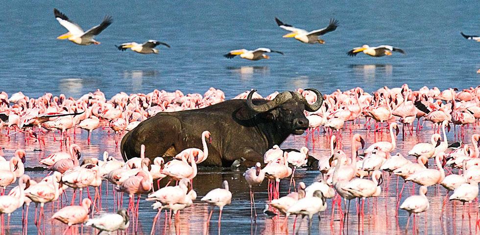 8 Days Kenya and Tanzania Combined Masai Mara, Lake Nakuru, Arusha, Serengeti National Park and Ngorongoro Crater