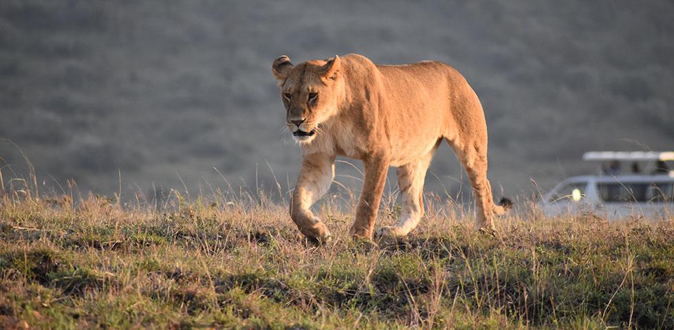 9 Days Kenya Safari Amboseli, Aberdare, Samburu, Lake Nakuru and Masai Mara