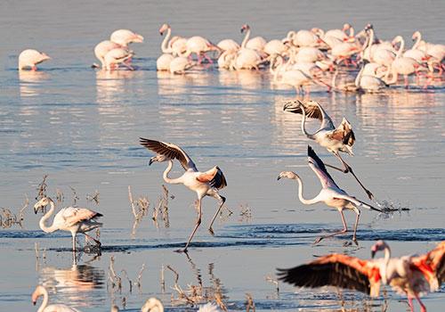 9 Days Kenya and Tanzania Circuit Safari Lake Nakuru, Masai Mara, Serengeti, Ngorongoro Crater, Lake Manyara, Arusha and Nairobi
