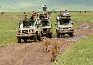 9 Days Kenya and Tanzania Standard Safari Masai Mara, Lake Nakuru, Arusha, Lake Manyara, Serengeti, Ngorongoro Crater