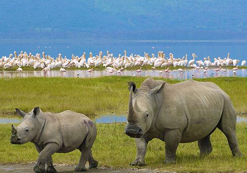 Day Trip to Lake Nakuru National Park.