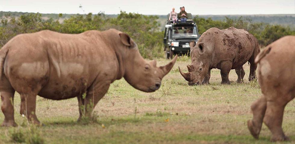 Day Trip to Lake Nakuru National Park