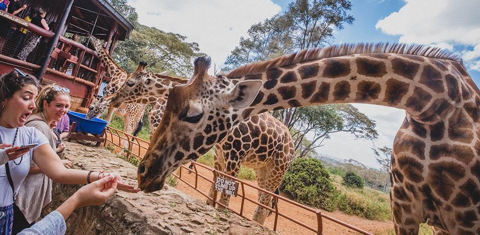 Giraffe Center and Bomas of Kenya – 3hrs 30minutes