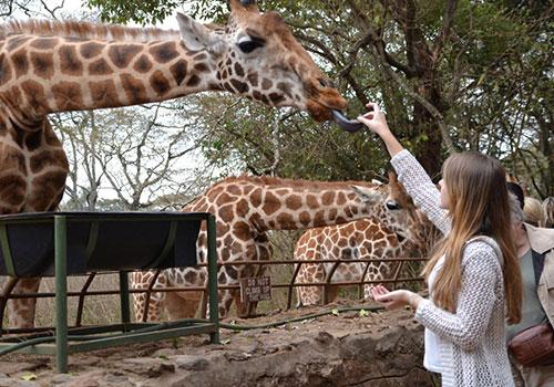 Giraffe Center and David Sheldrick– 3 hrs
