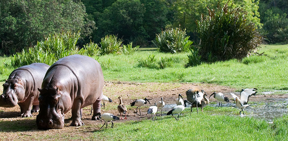 Haller park and Nguuni Wildlife Sanctuary – 3hrs