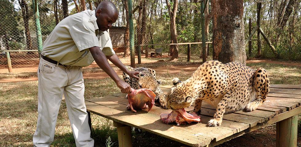 حديقة نيروبي الوطنية ، سير سفاري نيروبي ودار الأيتام في نيروبي - 6 ساعات