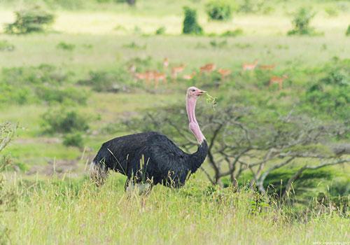 Nairobi National Park, Nairobi safari walk and Nairobi Animal Orphanage - 6 hrs