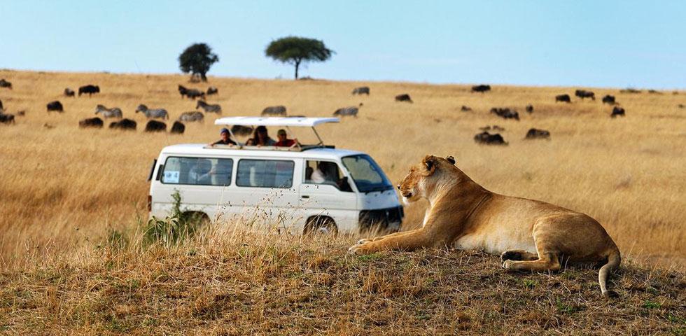 5 ditë Kenia Safari Masai Mara, Liqeni Nakuru dhe Liqeni Baringo / Bogoria