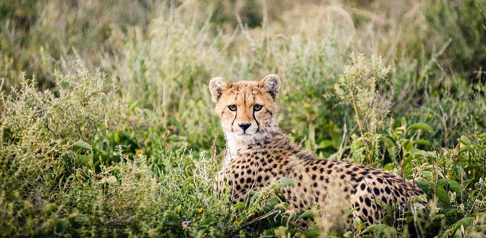 Kenya Tanzania budget safari