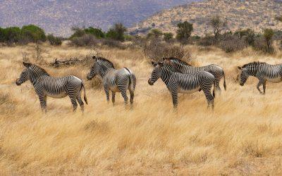 Kenya Safari Holiday Tours