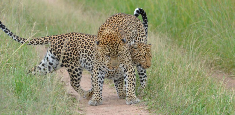 Kenya Budget Holiday Safaris