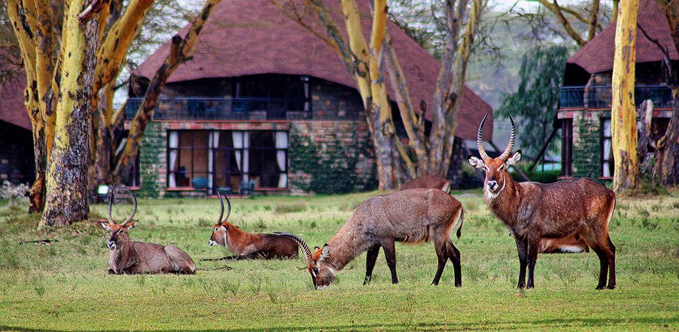 Best of Kenya Lodge Safari